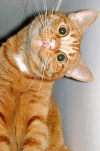 Кот смотрит боком